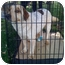 Photo 2 - Australian Shepherd/Cattle Dog Mix Dog for adoption in Fowler, California - Felix