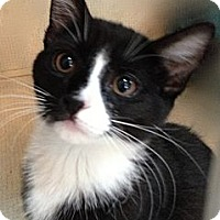 Adopt A Pet :: KATIE - 2013 - Hamilton, NJ