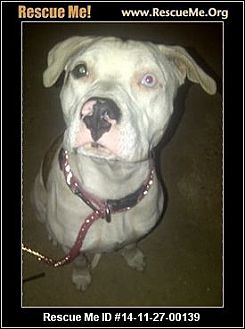 American Staffordshire Terrier Mix Dog for adoption in west hollywood, California - Valintine