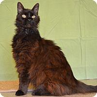 Adopt A Pet :: Radiance - Larned, KS