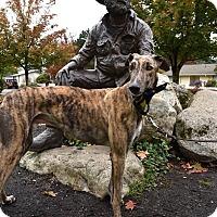 Adopt A Pet :: Rio - Seattle, WA