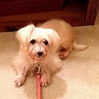 Adopt A Pet :: Esmee - Alpharetta, GA