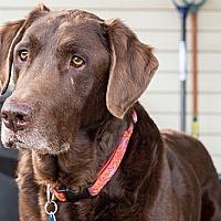 Adopt A Pet :: Quincy - Purcellville, VA