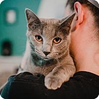 Adopt A Pet :: Piper - Wichita, KS