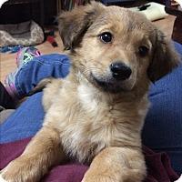 Adopt A Pet :: Franklin - Bernardston, MA
