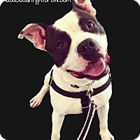 Adopt A Pet :: Winwood - Toledo, OH