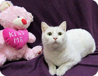Domestic Shorthair Cat for adoption in Lexington, North Carolina - ENYA
