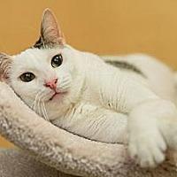 Adopt A Pet :: Neury - Miami, FL
