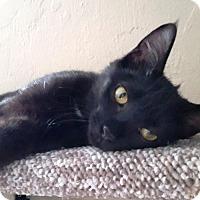 Adopt A Pet :: Leira - St Paul, MN