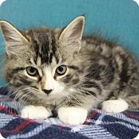 Adopt A Pet :: Denver - Benbrook, TX