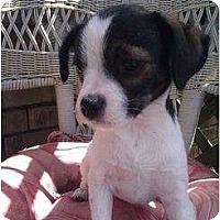 Adopt A Pet :: Moe - Bloomingdale, GA