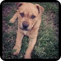 Adopt A Pet :: Jack - Hancock, MI