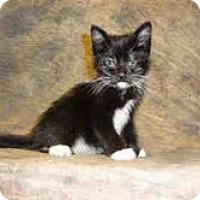 Adopt A Pet :: Joey - Arlington, VA