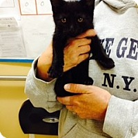 Adopt A Pet :: Saratoga - Troy, OH
