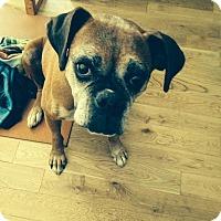 Adopt A Pet :: Maggie - Santa Monica, CA