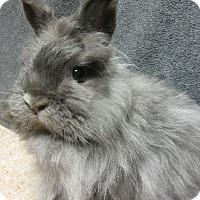 Adopt A Pet :: Tidbit - Newport, DE