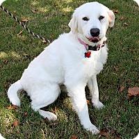 Adopt A Pet :: Sunshine  *Adopted! - Tulsa, OK