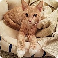 Adopt A Pet :: Gilbert - Chicago, IL