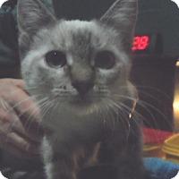 Adopt A Pet :: Starla - Pensacola, FL