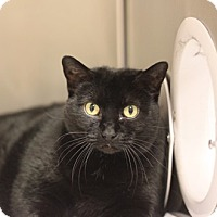 Adopt A Pet :: Lyra - Naperville, IL