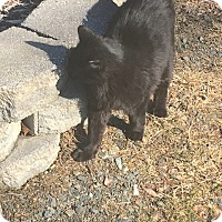 Adopt A Pet :: Tootsie - BARN CAT - Sparta, NJ