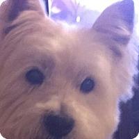 Adopt A Pet :: CALLAN-ADOPTION PENDING - Frisco, TX