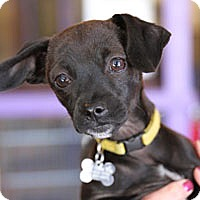Adopt A Pet :: Buttons - Pacific Grove, CA