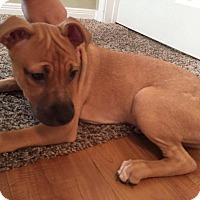 Adopt A Pet :: Marsha - Houston, TX