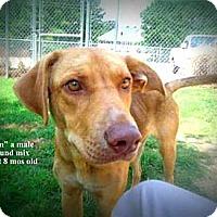 Adopt A Pet :: Cain - Gadsden, AL