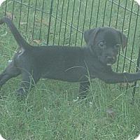 Adopt A Pet :: tandoor - Phoenix, AZ