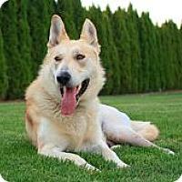 Adopt A Pet :: Trooper - Seattle, WA