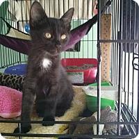 Adopt A Pet :: Portia - Pasadena, CA
