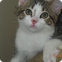 Adopt A Pet :: Leslie - St. Louis, MO