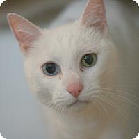 Adopt A Pet :: Fromage - Canoga Park, CA