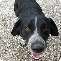 Adopt A Pet :: Bubba - West Hartford, CT