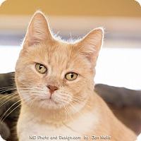 Adopt A Pet :: Maxime - Fountain Hills, AZ