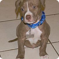 Adopt A Pet :: Yoshi - Framingham, MA