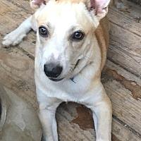 Adopt A Pet :: Jessie - Staunton, VA
