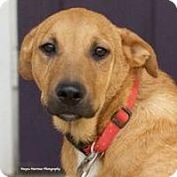 Adopt A Pet :: Summit - PORTLAND, ME