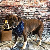 Adopt A Pet :: Koa - Wilmington, NC