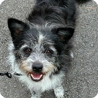 Terrier (Unknown Type, Medium) Mix Dog for adoption in Potomac, Maryland - Abigail