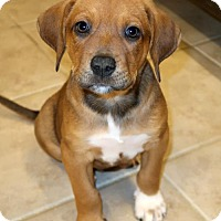 Adopt A Pet :: Chaz - Rochester, NY