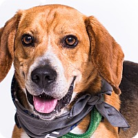 Adopt A Pet :: Angus - New Castle, PA