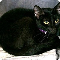 Adopt A Pet :: Mimi - Chesapeake, VA