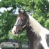 Adopt A Pet :: Esprit - Nicholasville, KY