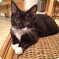 Adopt A Pet :: Pepper - East Hanover, NJ