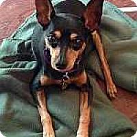 Adopt A Pet :: Joanne - McDonough, GA