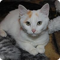 Adopt A Pet :: Lily - Waxhaw, NC