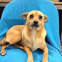 Terrier (Unknown Type, Medium) Mix Dog for adoption in Fresno, California - Tank