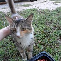 Adopt A Pet :: Blossom - Pensacola, FL